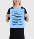 Types of Whales Poster