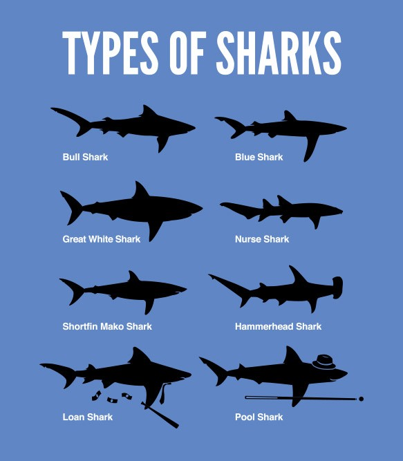 physical characteristics of the great white shark and its appearance in the media Other physical characteristics of the hammerhead sharks are similar to another shark species they have nostrils at the tip of their head and large eyes at each side of it the mouth is small, contains serrated teeth and locates under the head.